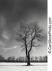 noir, unique, arbre