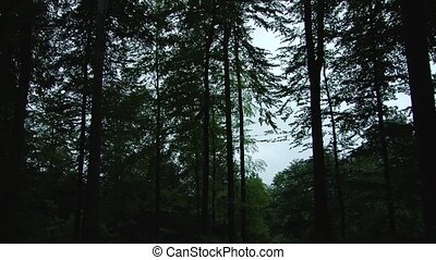 Noisy Forest Ambience after Dusk - Long footage of a noisy...