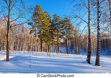 noite, floresta, inverno