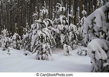 noite, floresta, nevado
