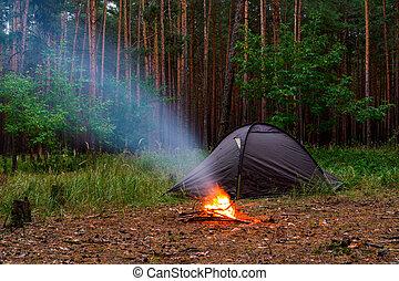 noite, floresta, pinho, barracas