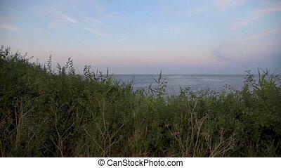 noite, litoral, contra, vegetação, céu, pacata, mar