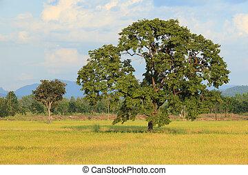 noite, luz, de, árvore grande, planta, em