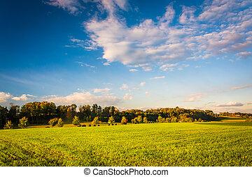 noite, luz, ligado, um, campo, em, rural, york, município, pennsylvania.