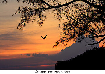 noite, pássaro voador