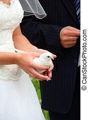 noiva, pombo branco, segurando, casório