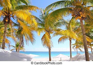 noix coco, antilles, arbres, exotique, plage paume