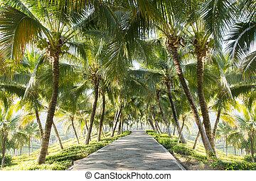 images de exotique palmier jardin palm arbre dans exotique csp13444283 rechercher. Black Bedroom Furniture Sets. Home Design Ideas
