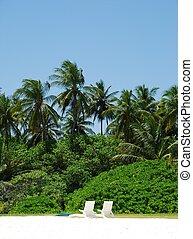 noix coco, chaises, concept), arbres, (honeymoon, paume, blanc