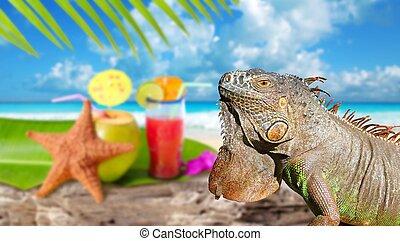 noix coco, cocktail, mexique, plage tropicale, iguane
