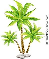 noix coco, feuilles, arbres, exotique, vert, paume
