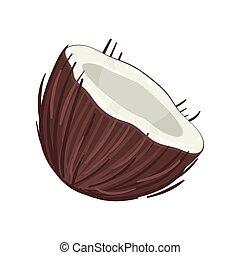 noix coco, illustration, vecteur, fond, moitié, blanc
