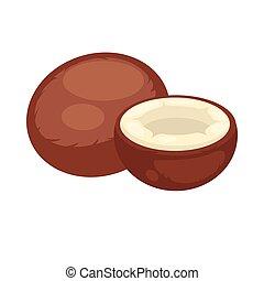 noix coco, isolé, arrière-plan., vecteur, moitié, blanc, entier