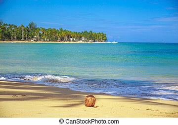 noix coco, plage