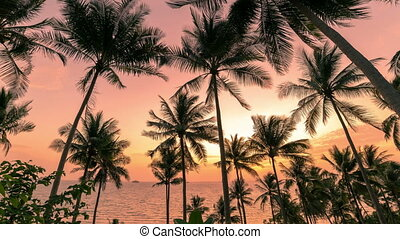 noix coco, silhouette, timelapse, arbres, paume, 4k, plage, sunset.