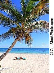 noix coco, tuquoise, antilles, arbres, paume, mer