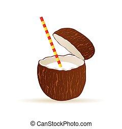noix coco, vecteur, illustration