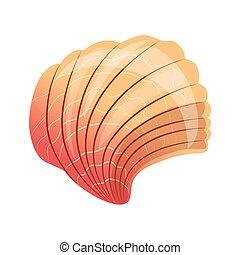 Turitella coquille color vis illustration ou - Coquille saint jacques dessin ...
