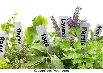 nom, haut, frais, étiquettes, herbes, fin