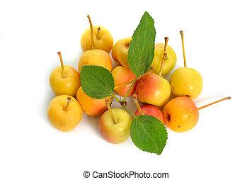 nombres, manzana, manzana, siberiano, manchurian, baccata,...