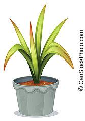 non-flowering, 植物
