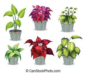 non-flowering, plantas, seis