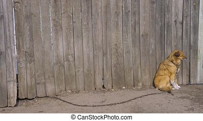 Non-pedigree brown dog sits at the wooden fence. Uncontented...