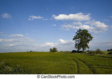 Non-urban field in southern Poland