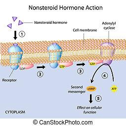 nonsteroid, hormonas, eps10, acción