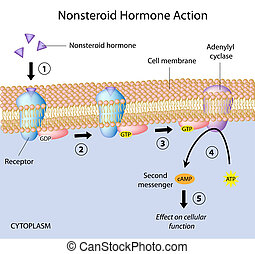 Nonsteroid hormones action, eps10