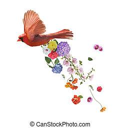noordelijk, vliegen, kardinaal, achtergrond, witte bloemen, schilderij