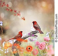 noordelijke kardinalen