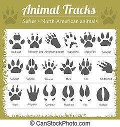 noorden, voetafdrukken, -, amerikaan, dier, dieren
