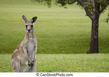 Noosa Valley Country Club, Golfplatz bei Noosa, Sunshinecoast, Queensland, Australien