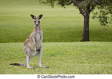 Noosa,Noosa Valley Country Club, golf course, Sunshine Coast, Queensland, Australia Noosa Valley Country Club, Golfplatz bei Noosa, Sunshinecoast, Queensland, Australien