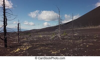 nord, -, 1975, éruption, mort, percée, conséquence, bois, ...