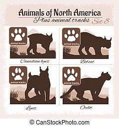 nord, footprints., animal traque, animaux, amérique