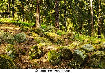 nord, forêt, scandinave