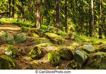 nord, foresta, scandinavo