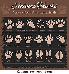 nord, ingombri, -, americano, animale, animali