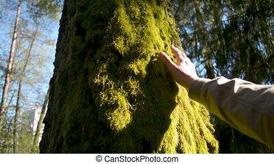 nord, mur, arbre, toucher, mousse, moquette, côté, homme