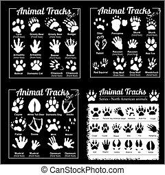 nord, -, pistes, américain, animal, animaux