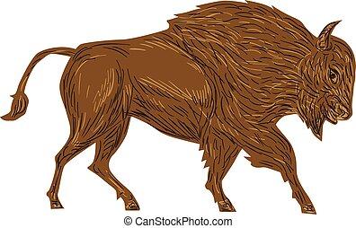 nordamericano, bisonte, retro, bufalo, addebitare