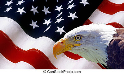 nordamerikanisch, kahler adler, auf, amerikanische markierung
