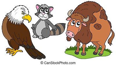 nordamerikanisch, tiere, sammlung
