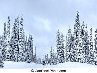 Nordic ski near Kelowna at Big White Ski Resort on a snowy day.