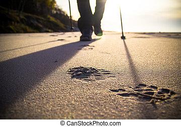 nordisch, gehen, sport, laufen, spaziergang, bewegungszittern, draußen, person, beine, ra