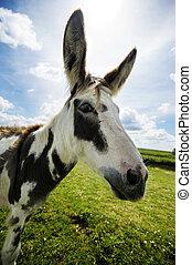 Norfolk Broads, Donkey side view close up