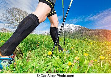 Norid walking in the meadow