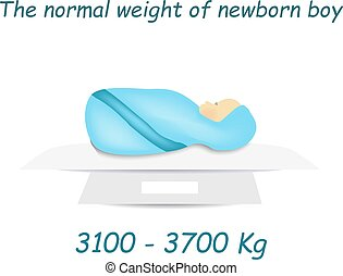 Norm weight of a newborn baby. Infographics. Vector...